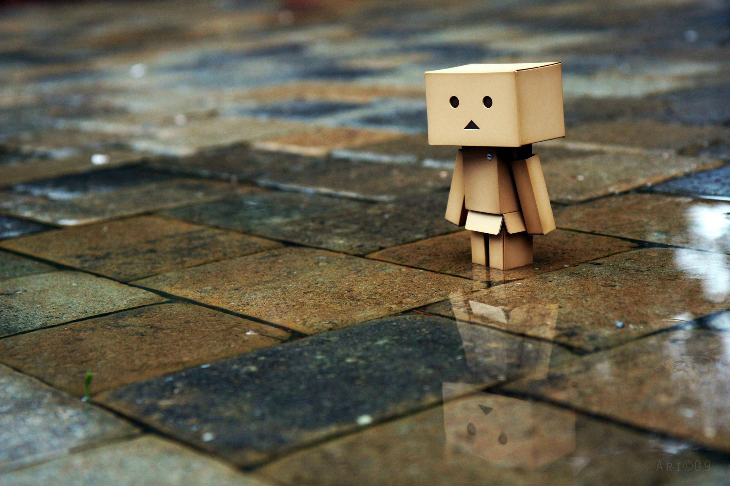 hinh anh danbo buon 19 scaled