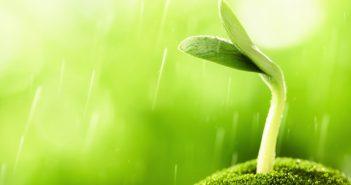 Hình ảnh mầm cây xanh vươn mình