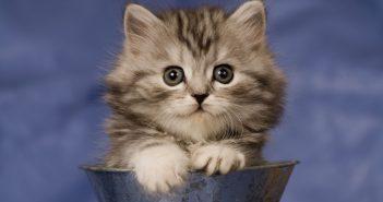 Hình nền mèo dễ thương ngốc manh