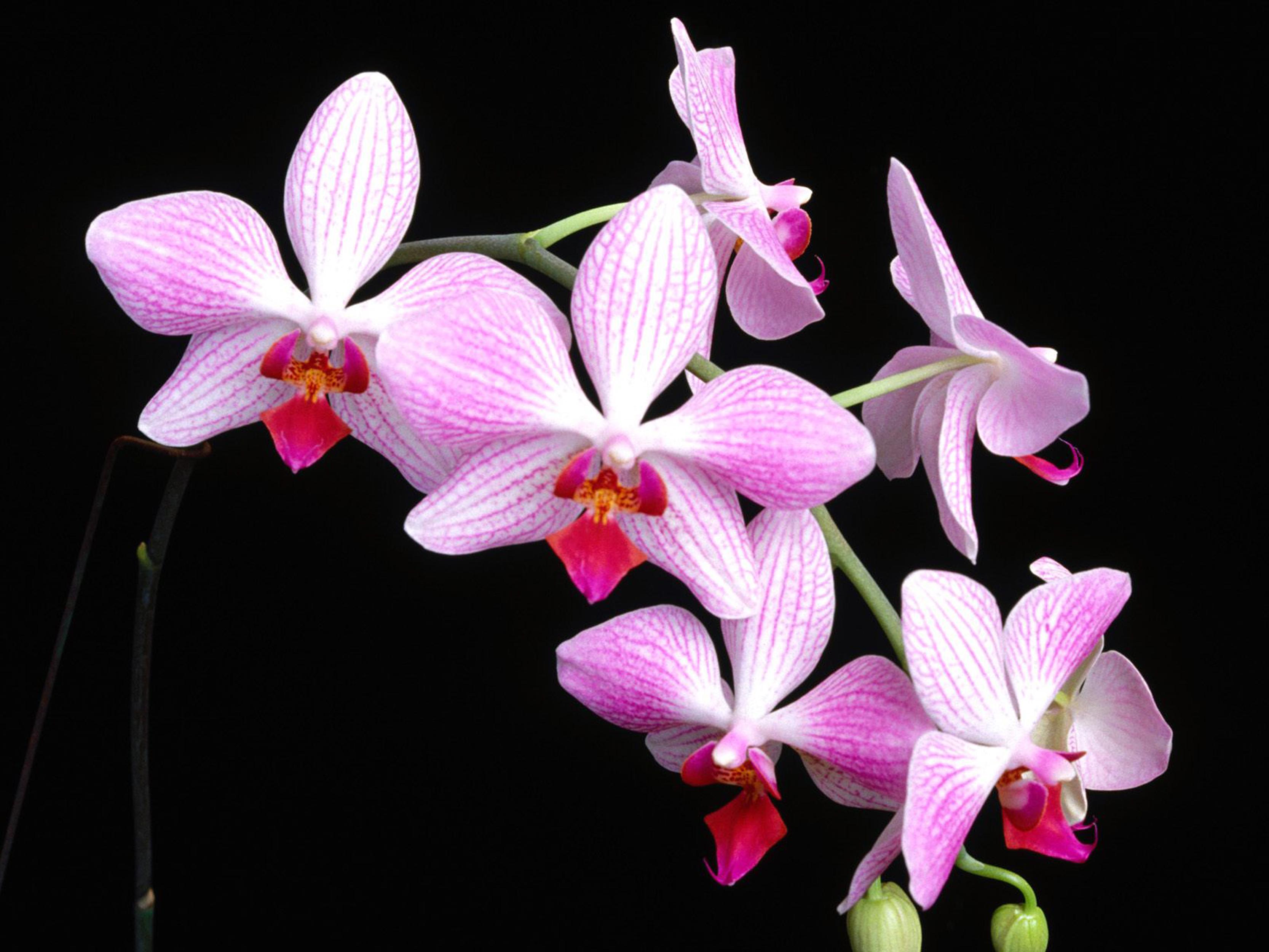 Ảnh hoa đẹp - Hoa đẹp khoe sắc giữa thiên nhiên