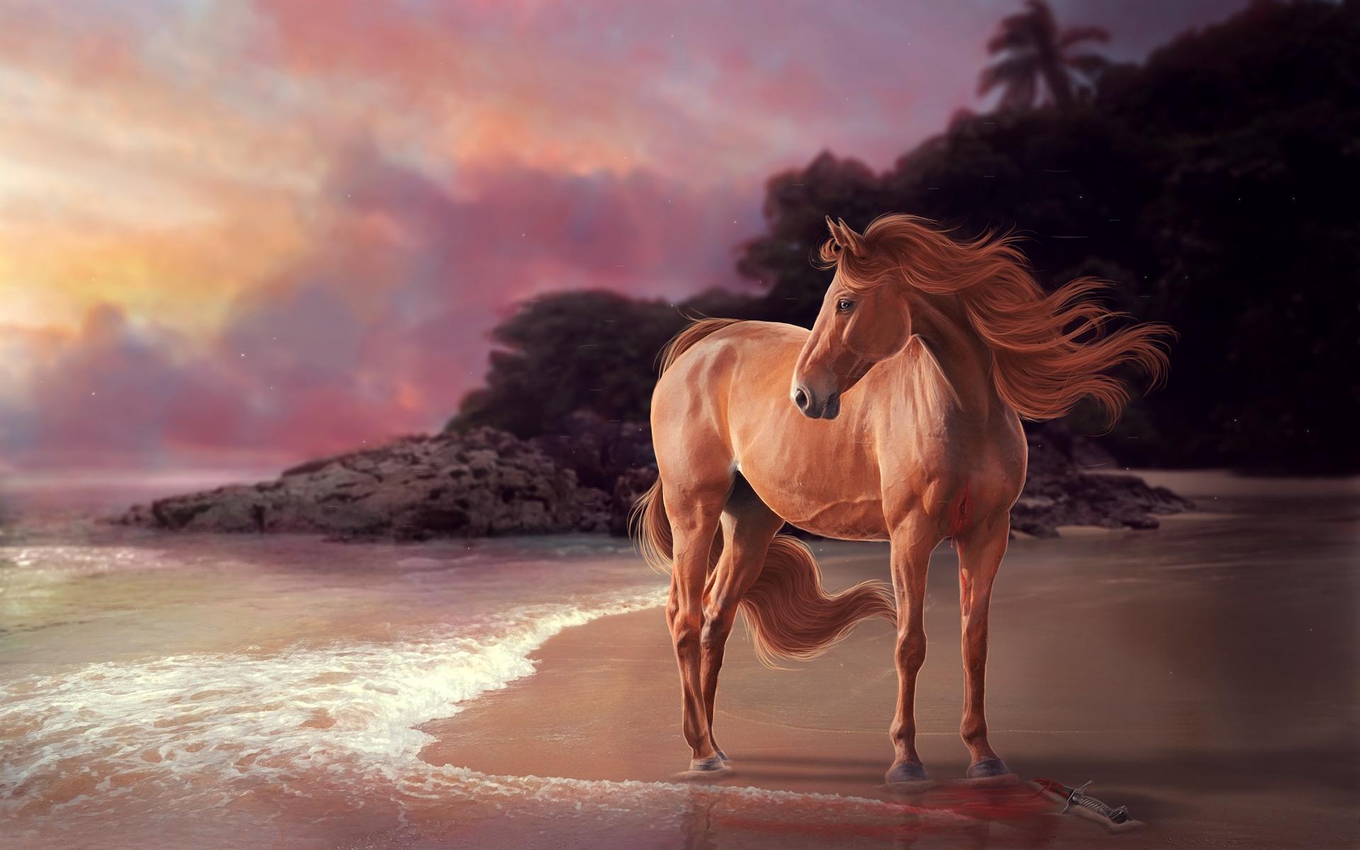 tải ảnh ngựa đẹp về máy tính
