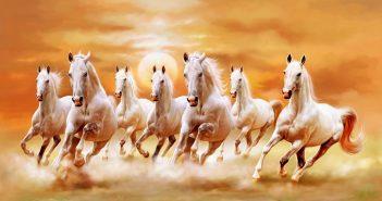 Hình ảnh đàn ngựa phi đẹp nhất