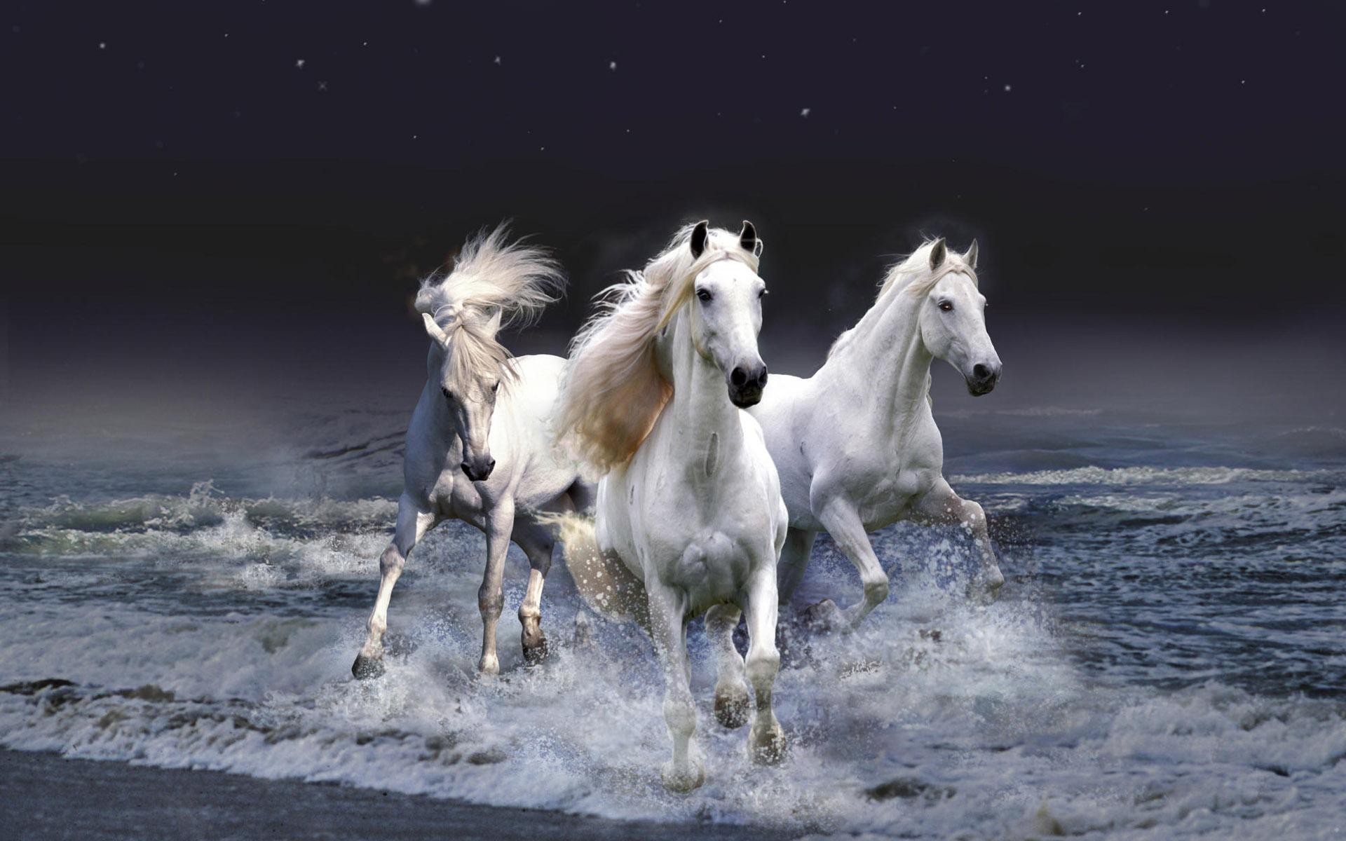 ảnh ngựa đẹp nhất thế giới