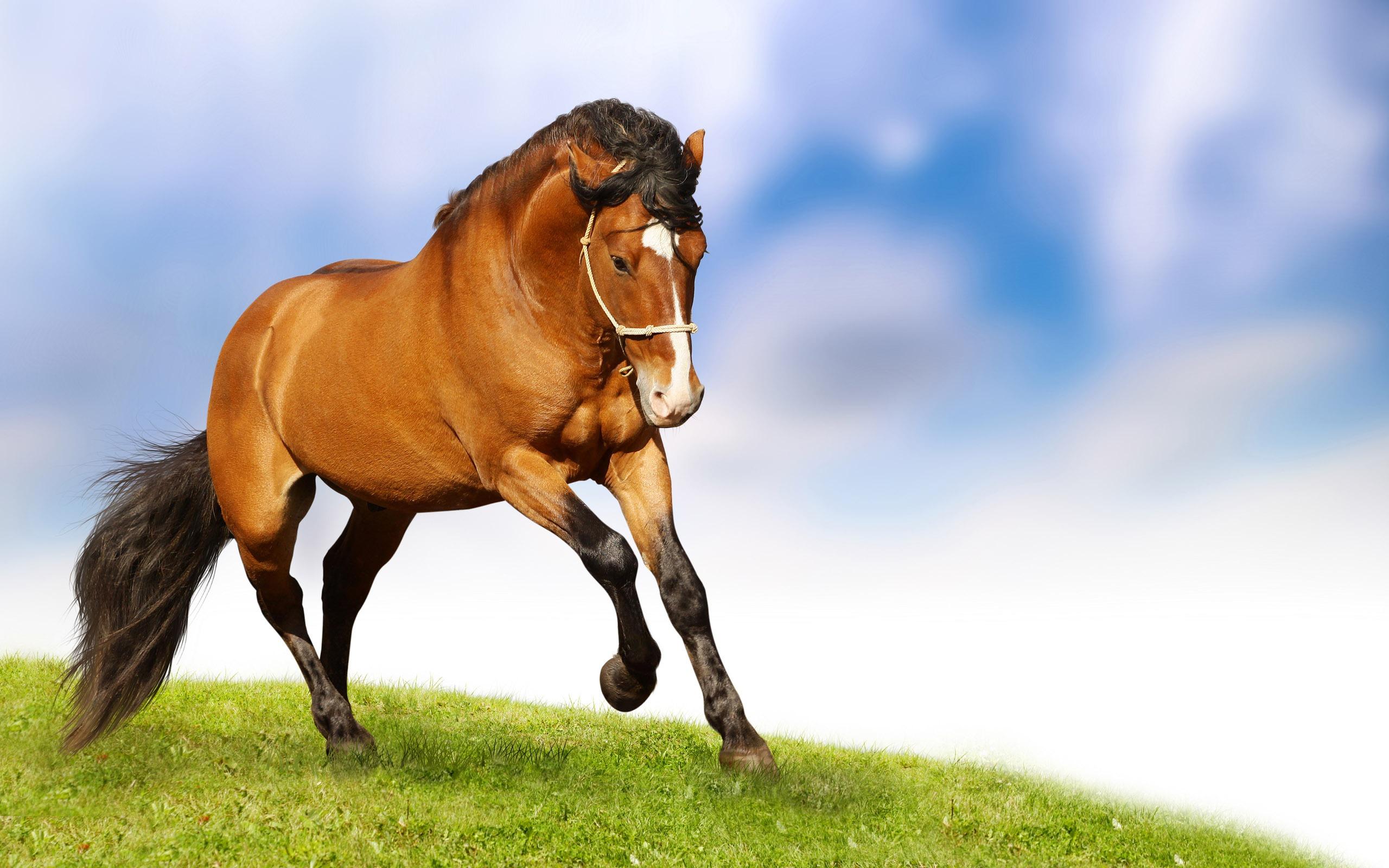 xem ảnh con ngựa đẹp nhất