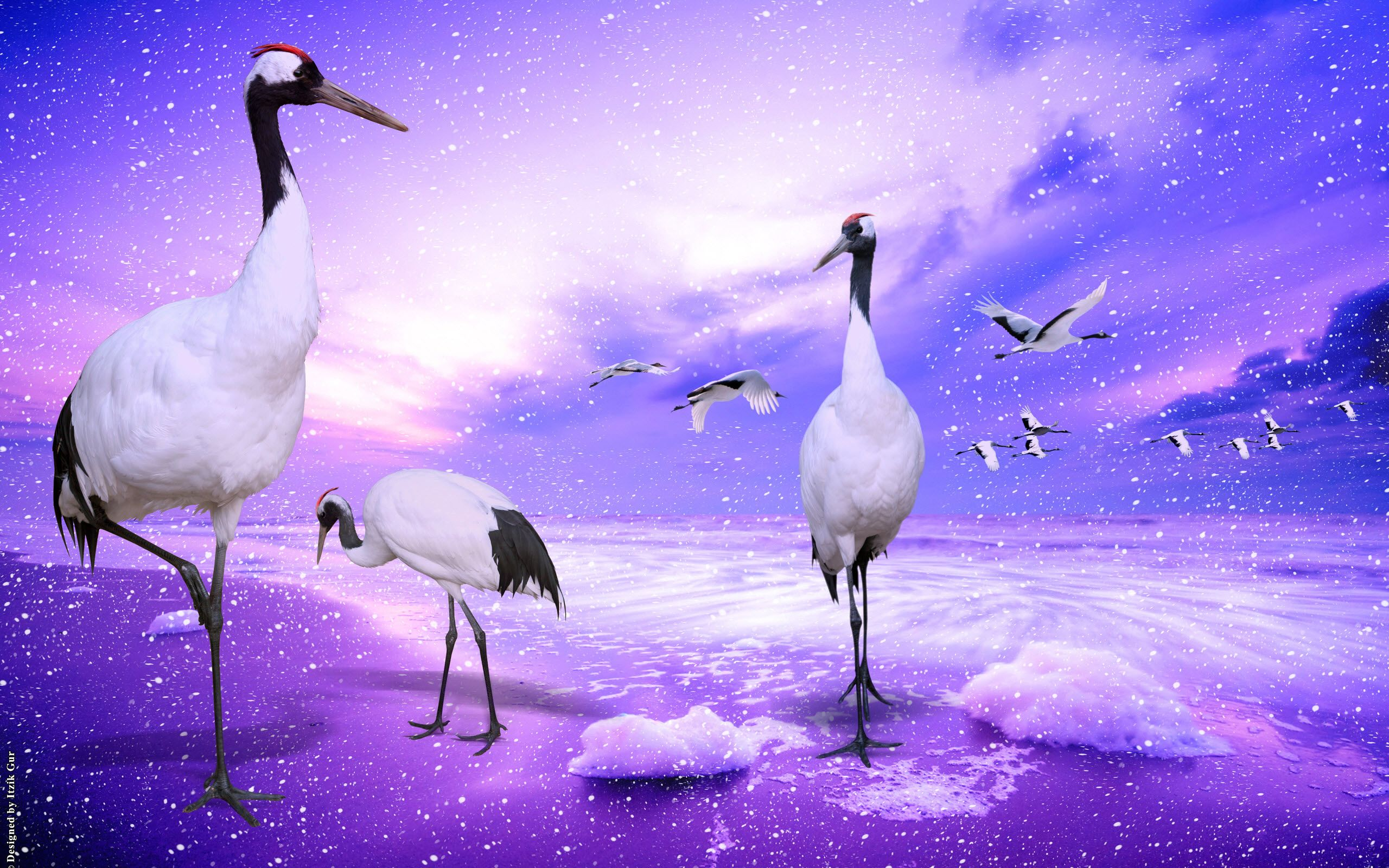 Tải ảnh chim hạc đẹp nhất thế giới