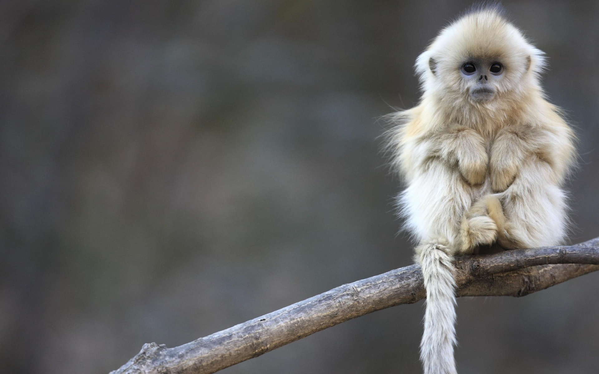 tải ảnh con khỉ đẹp nhất