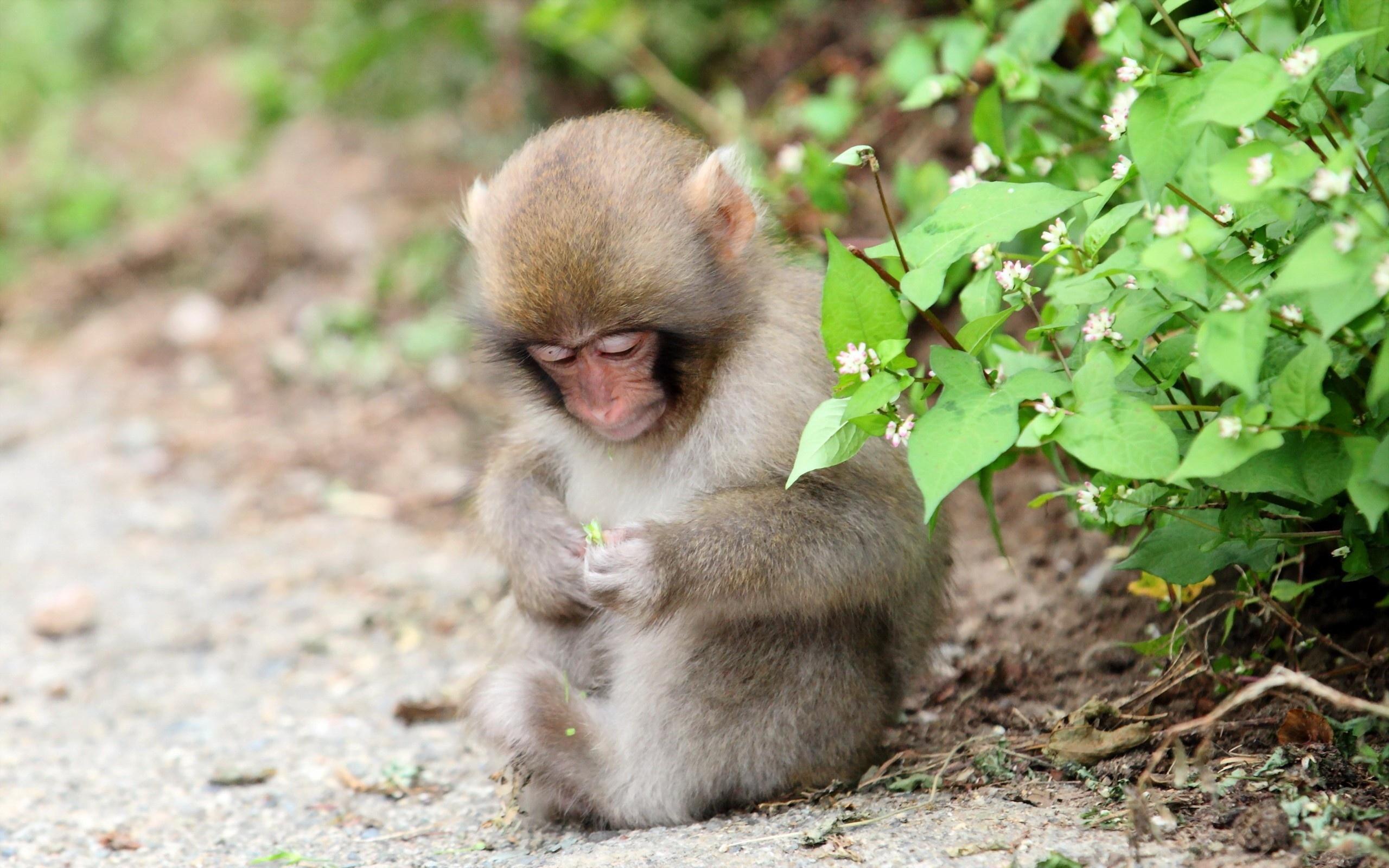 hình ảnh loài khỉ đáng yêu