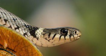Hình nền rắn đẹp full HD