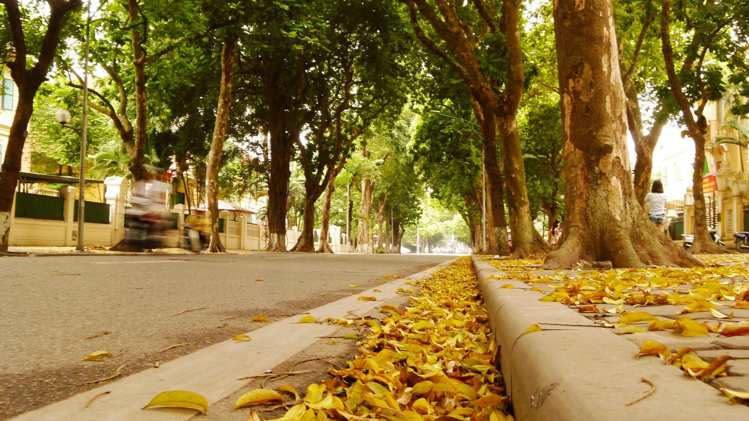 Hình ảnh đường Hoàng Diệu mùa thu
