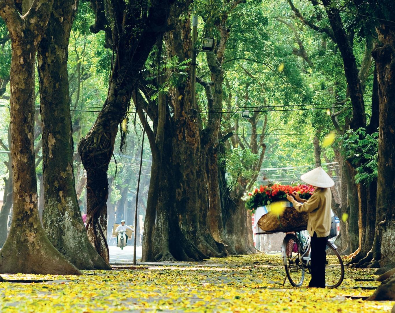 Hình ảnh đường Phan Đình Phùng