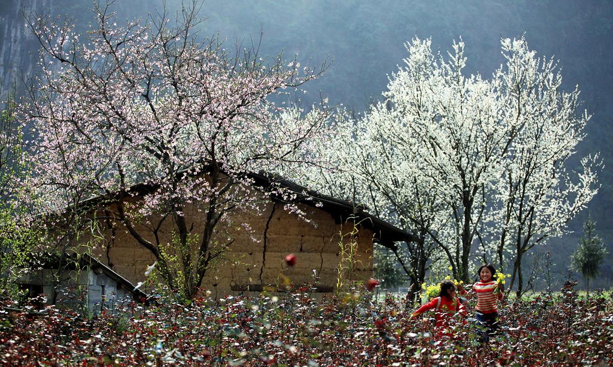 Mùa hoa đào nở ở Sapa
