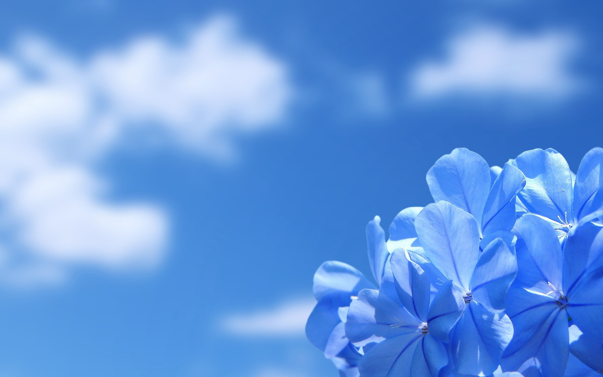 Hình ảnh màu xanh dương